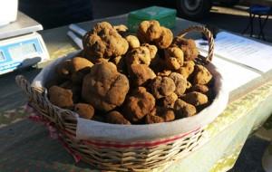 aups-Panier-truffes
